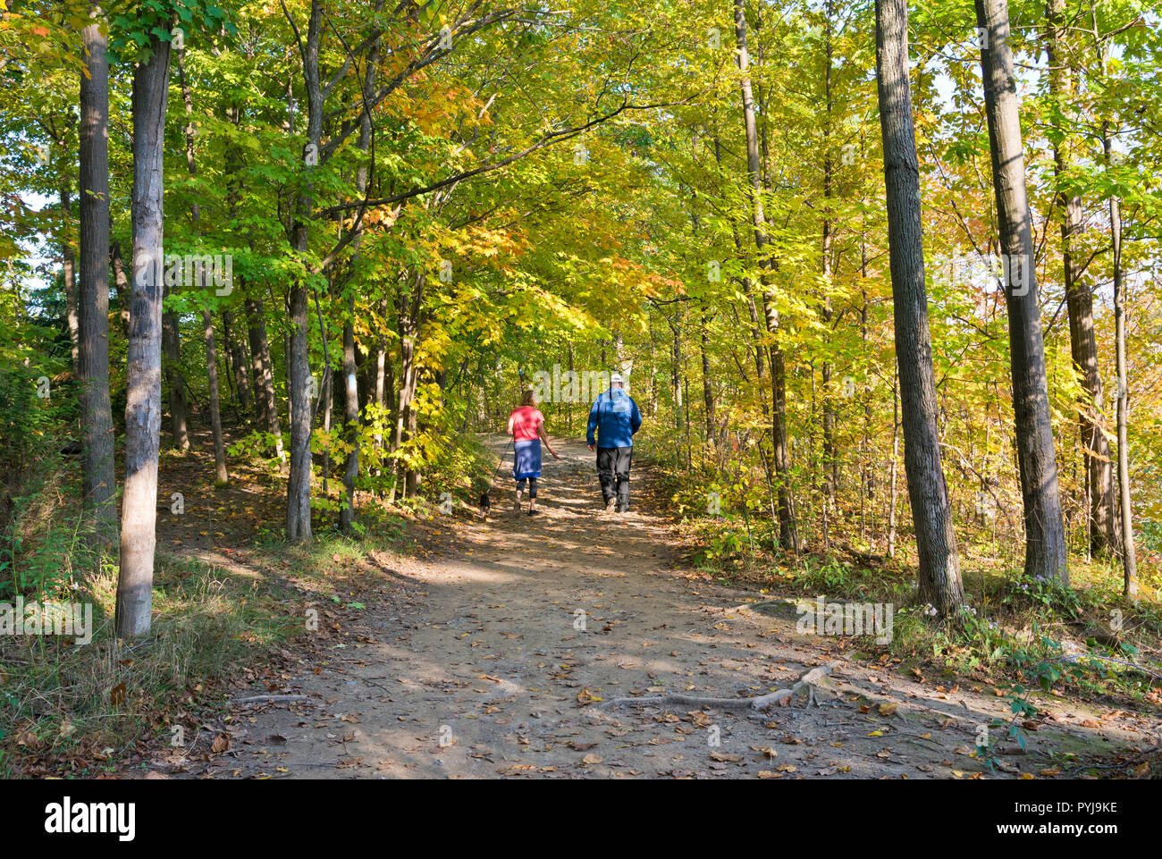 couple-walking-through-forest-path-on-th