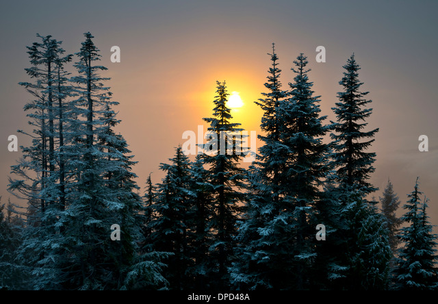 beautiful-winter-sunset-through-the-fog-